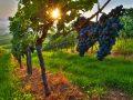 Norditalienischer Rotwein: Test & Empfehlungen (04/21)